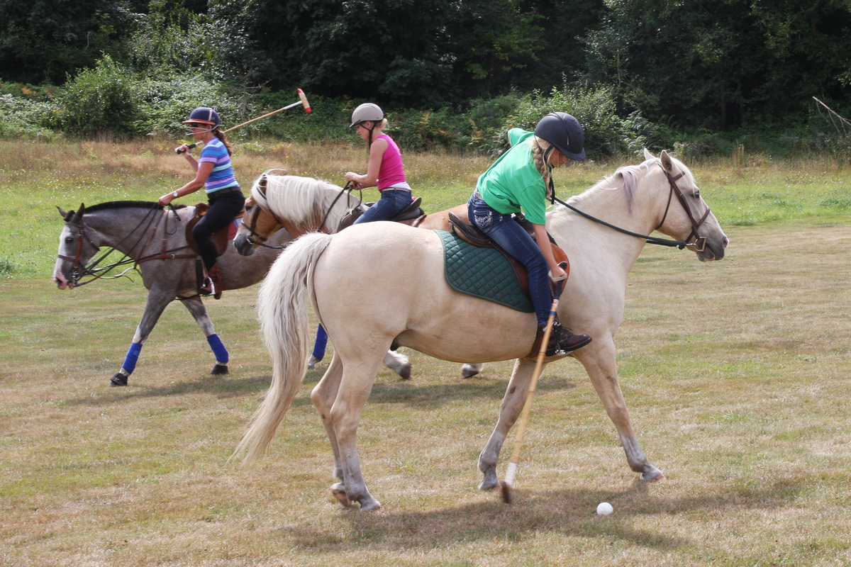 Polo is the most fun you can have sitting down.