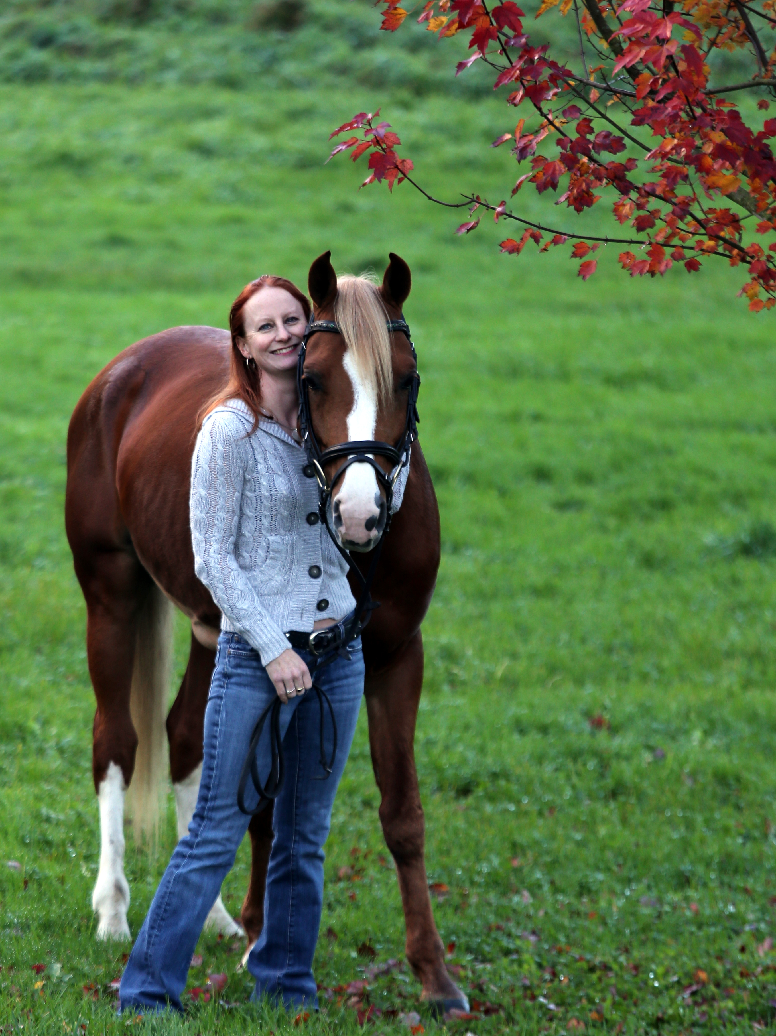 Enlightened 2006 Arabian stallion.