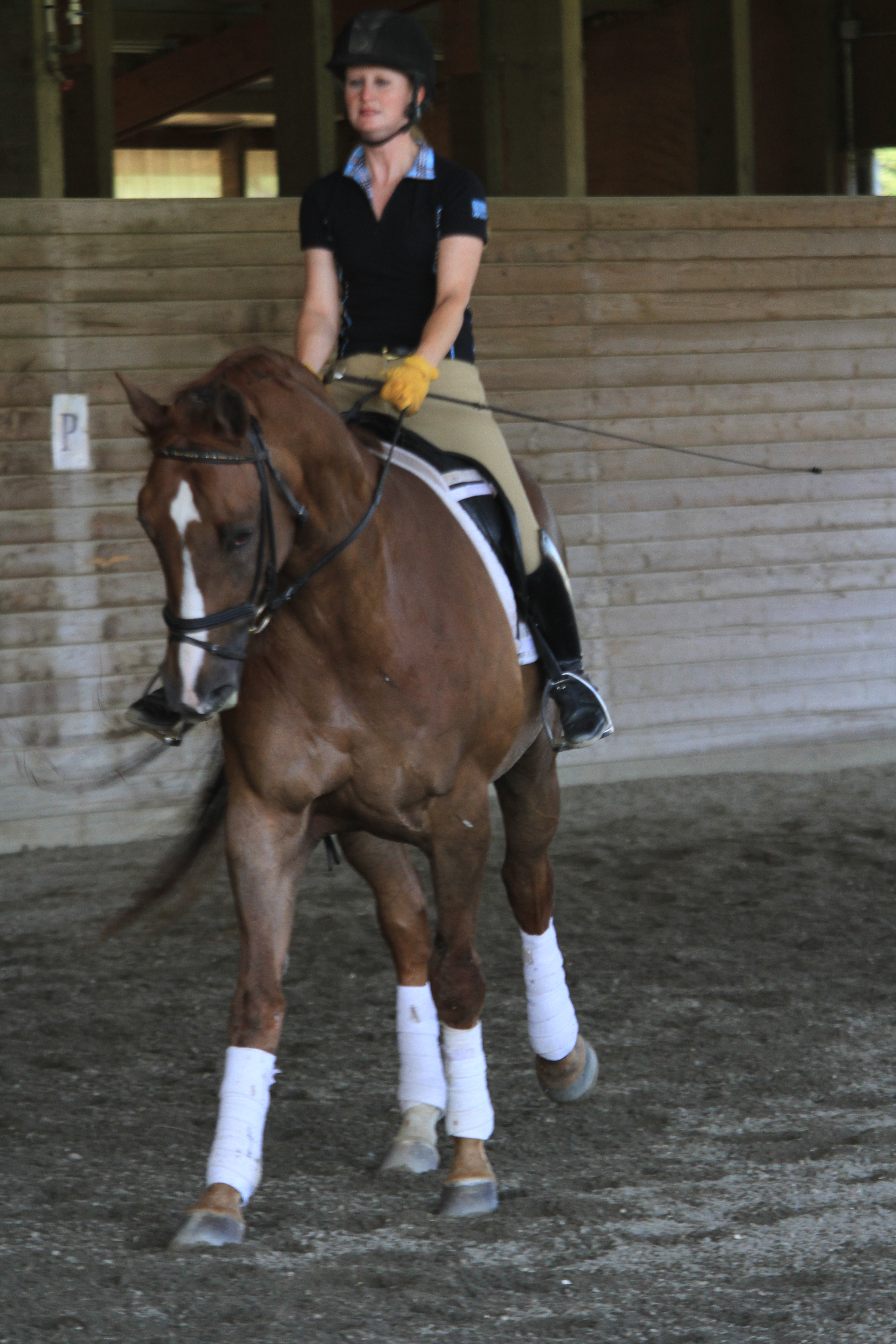 Kim and the Westfalen FEI gelding during one of our clinics over the summer. We bring in a few fabulous clinicians several times a year.