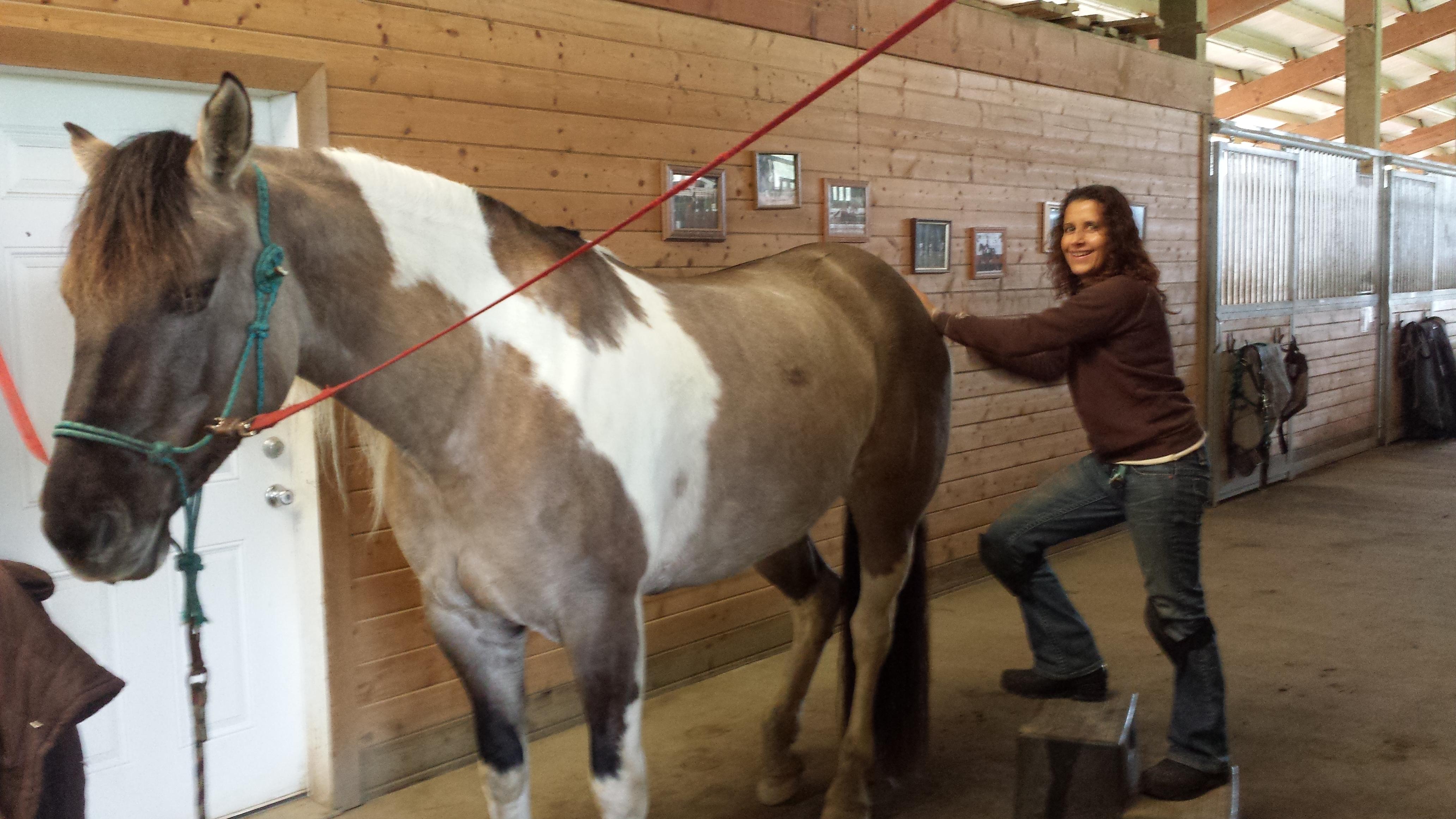 horse-massage-pic
