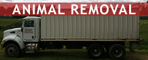 Animal-removal