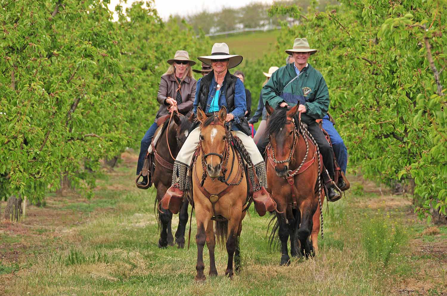 Hoof it through the wine country with Trail Boss Tiffany Fewel as your guide. Ride through the sun-soaked vineyards surrounding Cherry Wood, stop for tastings at two selected wineries and enjoy a gourmet picnic-style lunch at Cultura Winery