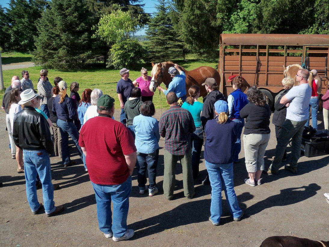 The Washington Draft Horse and Mule Association presents our annual harnessing and driving clinic.