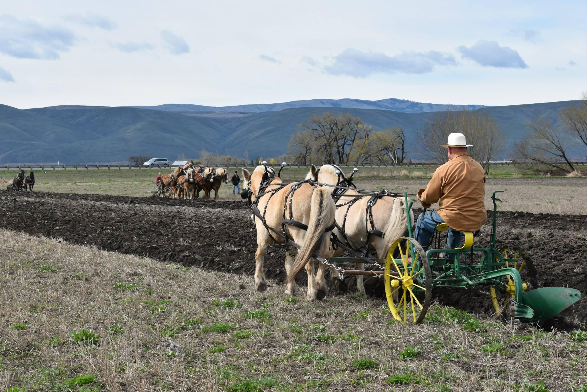 Washington Draft Horse & Mule Association, Inc. « nwequine.com
