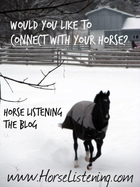 Horses. Riding. Life. Like us for daily thought-provoking, conceptual tips about riding, to listen to horses and life in general: www.horselistening.com
