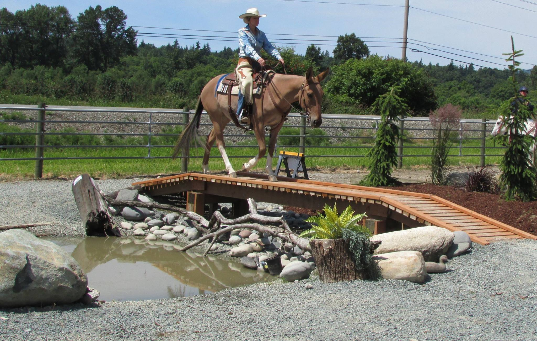 Obstacle Training for Show or a better relationship with your horse clinics, horsemanship, manners, confidence. Cindi has been training people and horses through the use of obstacles for over 25 years. The use of obstacles is also the best way to help people understand the way a horse learns and thinks.