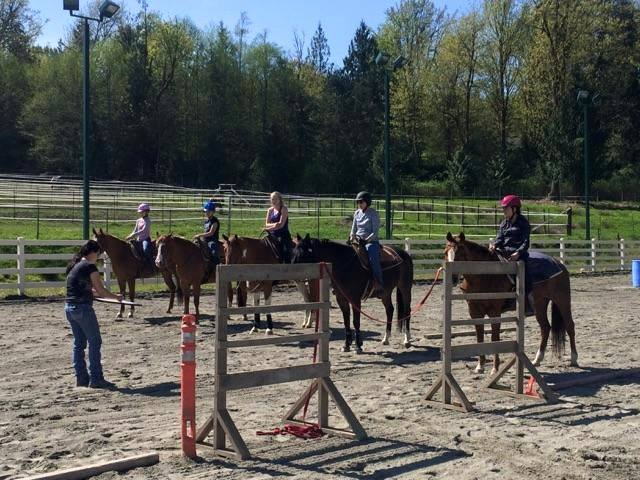 At Lisa Freimark Performance Training we specializing in western pleasure and all around events, lesson program for all ages and levels including huntseat, showmanship and trail.