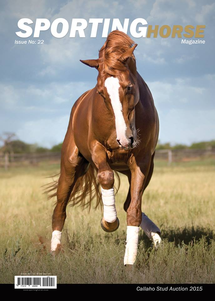 Sporting-Horse