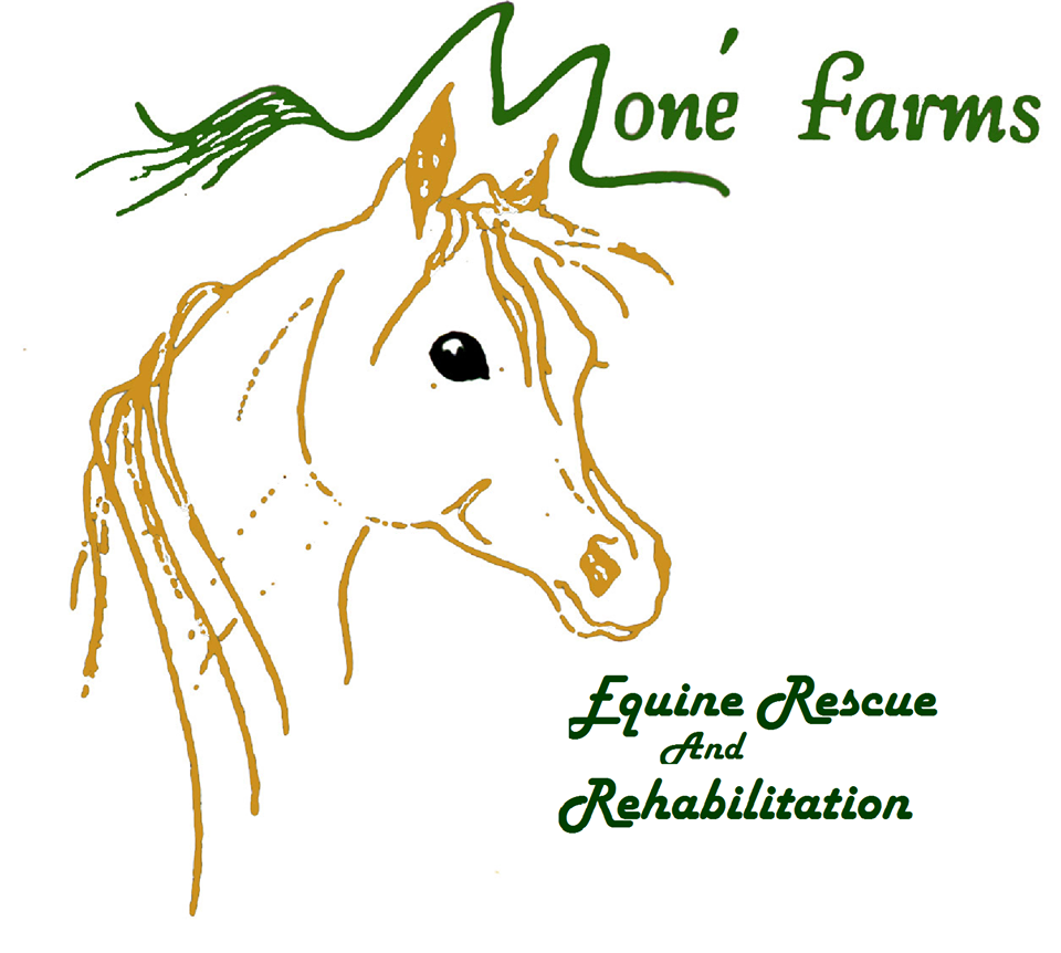 Moné Farms Equine Rescue and Rehabilitation is dedicated to the rescue of equines in need of a second chance.