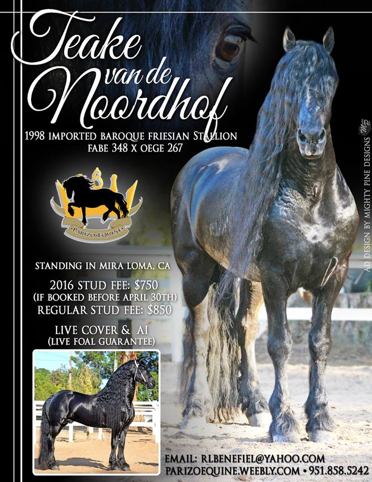 A big thank you to Parizo Equine for trusting Mighty Pine Designs to put this ad together for your Stallion. Teake van de Noordhof is magnificent! Best to you during the 2016 breeding season!