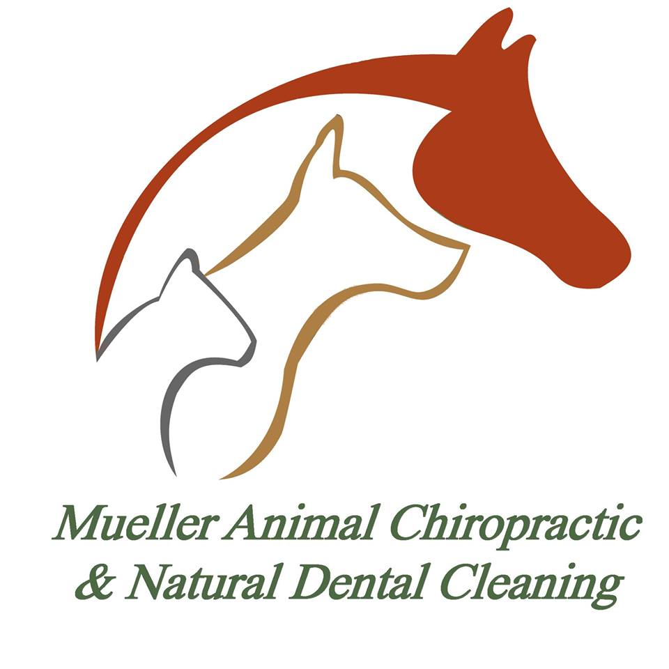 Dr. Mueller provides chiropractic care to help horse, dogs, and cats to stay healthly and active.  Mobile to several counties and with a small animal clinic in Bellingham.
