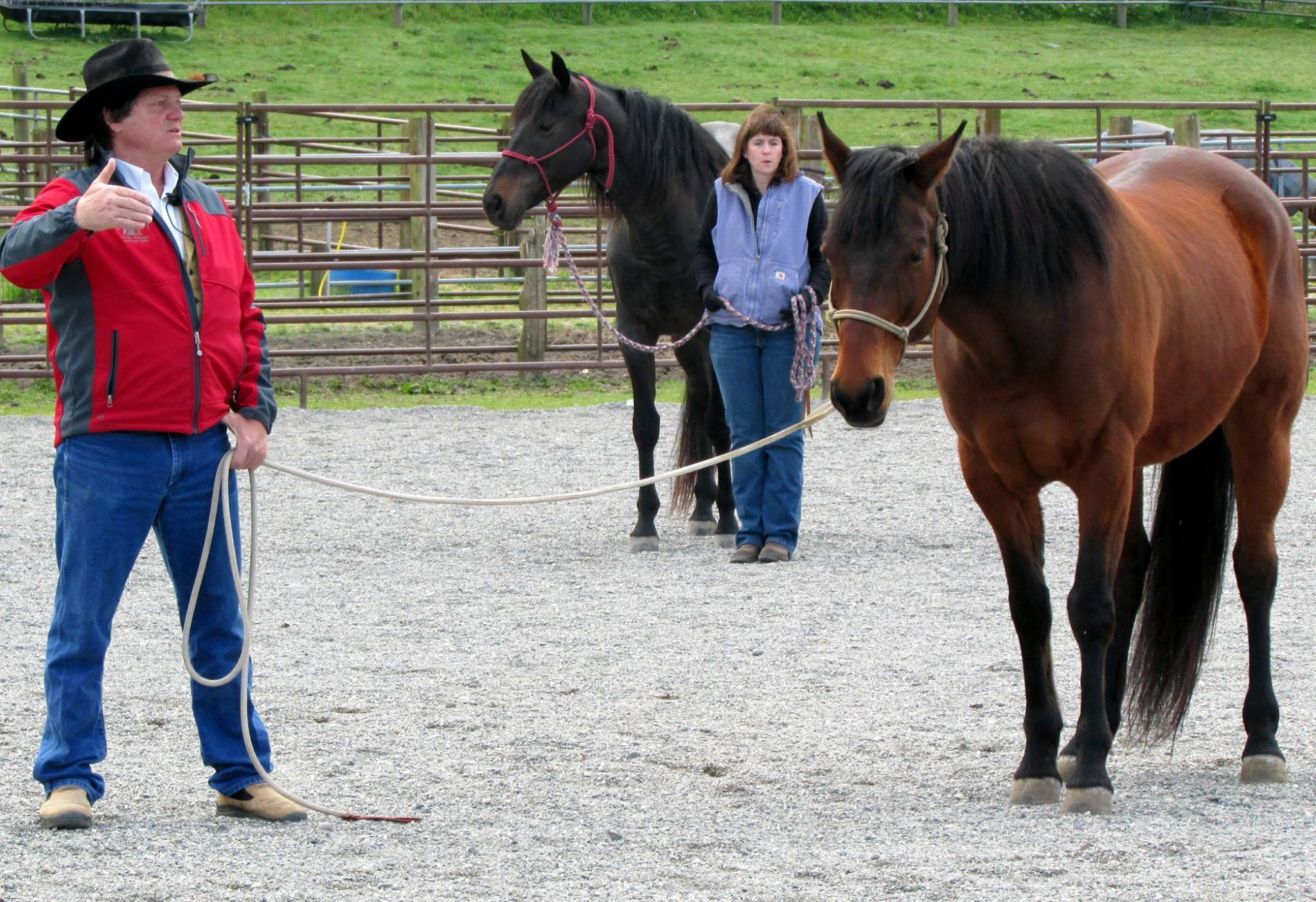 Ground work can be the foundation to creating a quality relationship and clear communication with your horse.