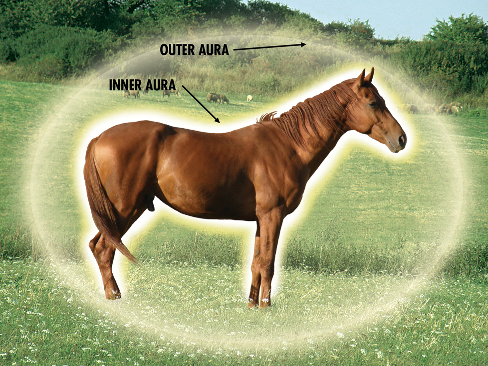 Equine Auric Fields