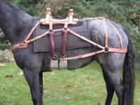 111 horse 1.jpg