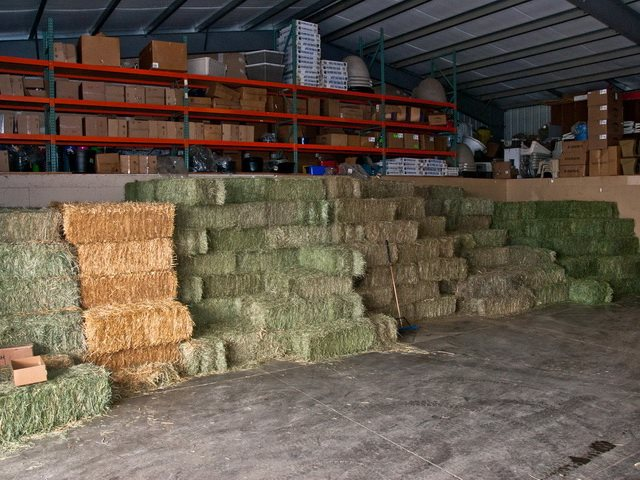 We have a large supply of Local 1st and 2nd cut hay, and delivery can be arranged. We carry Purina, Nutrena, and LMF feeds. We have feed for all your animals including: horses, cows, hogs, goats, sheep, deer, rabbit, guinea pigs,  llama and bird food.