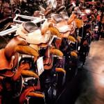 L saddles.jpg