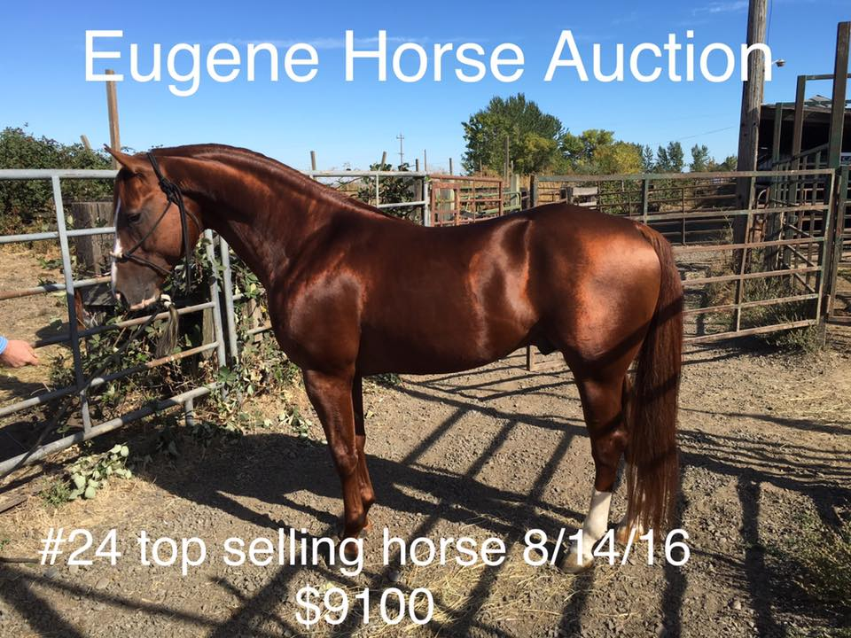 Eugene Horse Auction – 2nd Sunday of Every Month « nwequine com