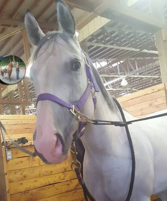 She was wearing her purple halter when she went missing.
