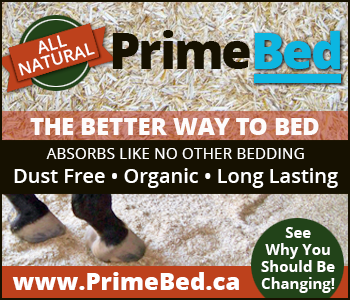 PrimeBed is very unique from other forms of bedding materials, in that liquids are absorbed from the bottom of the bedding only, unlike all other traditional beddings that get and remain wet from the top down, or are just poor absorbency overall. PrimeBed is different; it repels liquids upon surface contact, where they quickly migrate downward to the bottom of the bed. Once there, liquids settle in and immediately begin absorbing along the base of the bed.