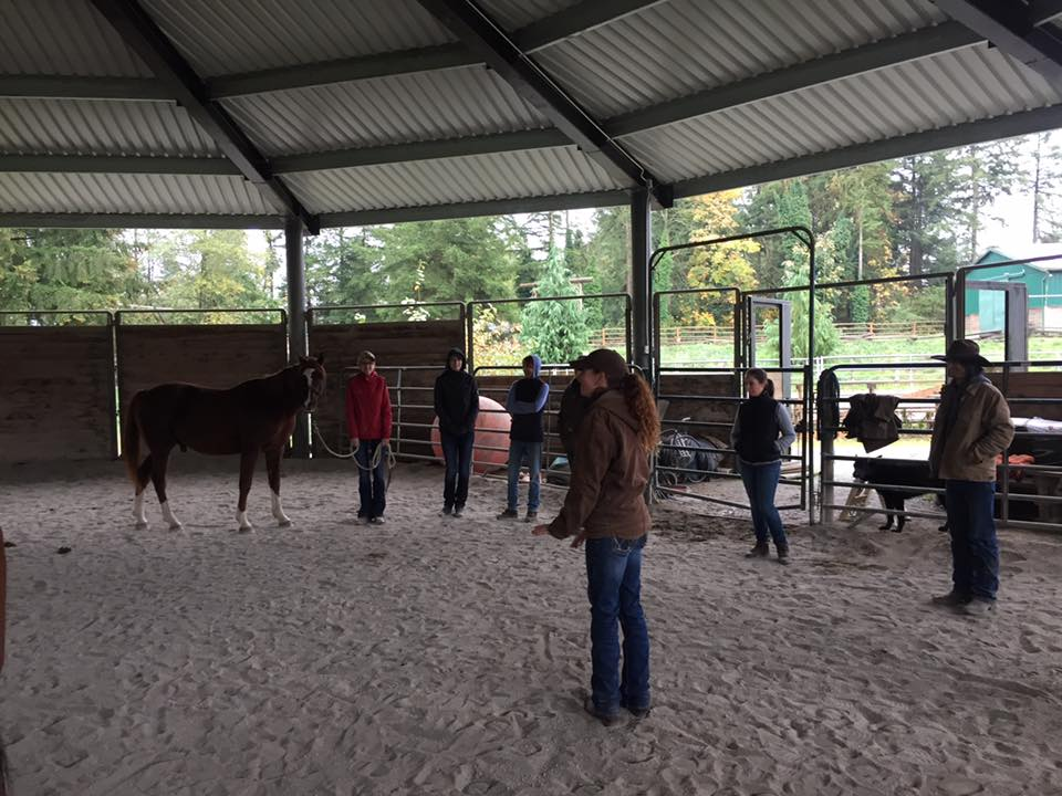 This weekend we learned the final adjustments of the hind end and all about the importance of teeth and the effect a dental imbalance can have on the overall performance of the horse. Then we went on a field trip to give the hard working horses of Timberline Ranch a therapy session.