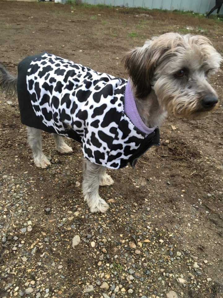 We keep your you four legged friends warm and stylish.