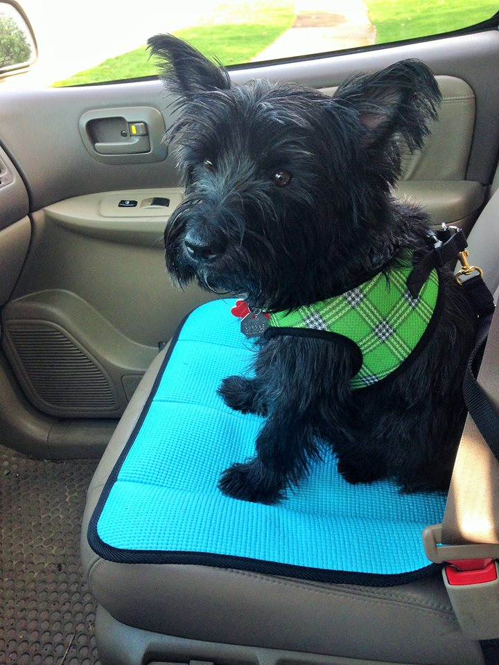 Buster Boy Mats easily roll up and secure with a hook and loop fastener. Rolling and unrolling the Mat is quick and easy and your seat will always be ready for your passenger or your pet instantly!