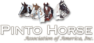 Pinto-Horse-New2