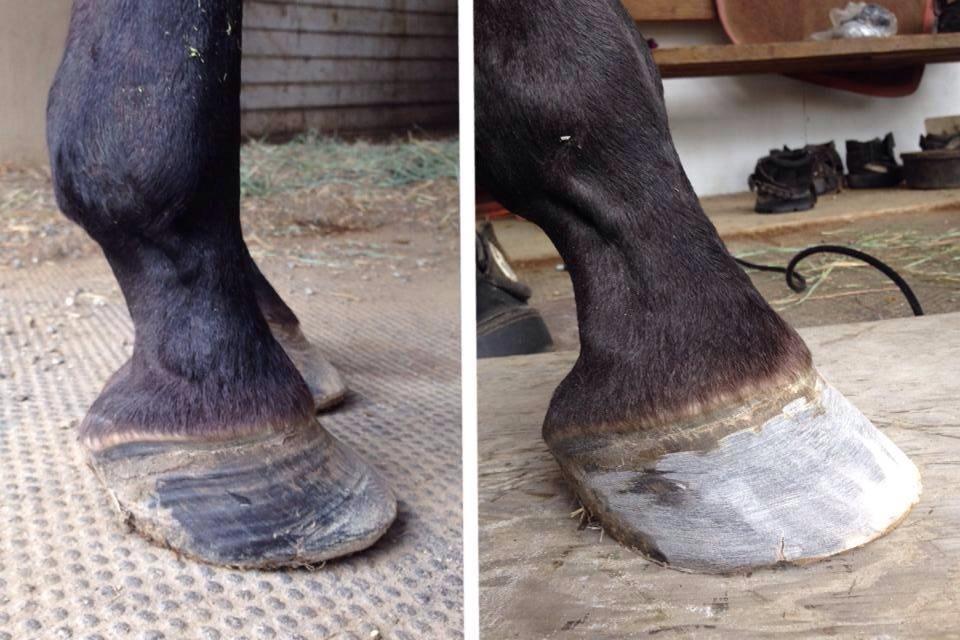 Founder, preparing for shoe