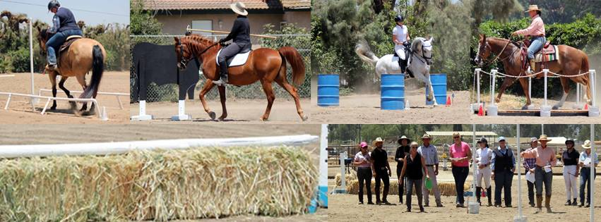 WE adds variety to your horse's life!