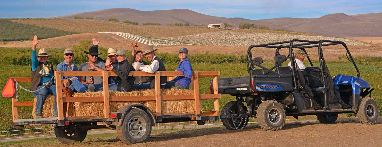 Climb aboard our Cowboy Limo for an old fashioned good time. Unwind and enjoy an open-air tour of the vineyards with tasting stops at selected wineries, a picnic lunch and loads of country fun along the way.  Our hay wagon tours are just a blast and allow us to take in more wineries than we can on horseback. Plus you don't have to do anything but kick back, bask in the beauty and leave the driving to us.