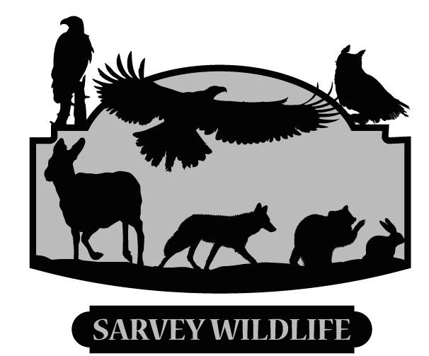 Sarvey Wildlife Care Center's mission is rescue, rehabilitate, and release. Injured, ill, and orphaned wildlife are brought to us for care.