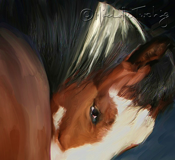 Custom Paintings of your horse