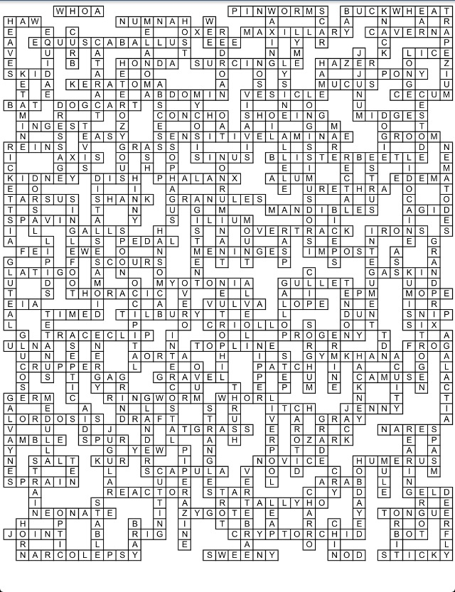 Fun Crossword Study Material!
