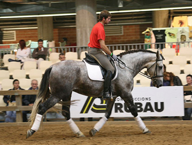 """After- Change of body use. Here the dressage rider has released his bracing posture and later commented, """"I have never felt my horse this free ever, and he doesn't feel lazy."""""""