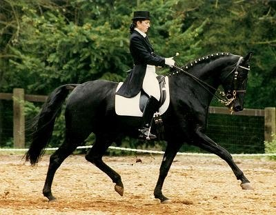 Dye Dressage offers customized, compassionate, and competitive training for horse and rider through the F.E.I. levels. Emma has achieved success, time after time, training challenging horses that have physical or mental rehabilition needs.