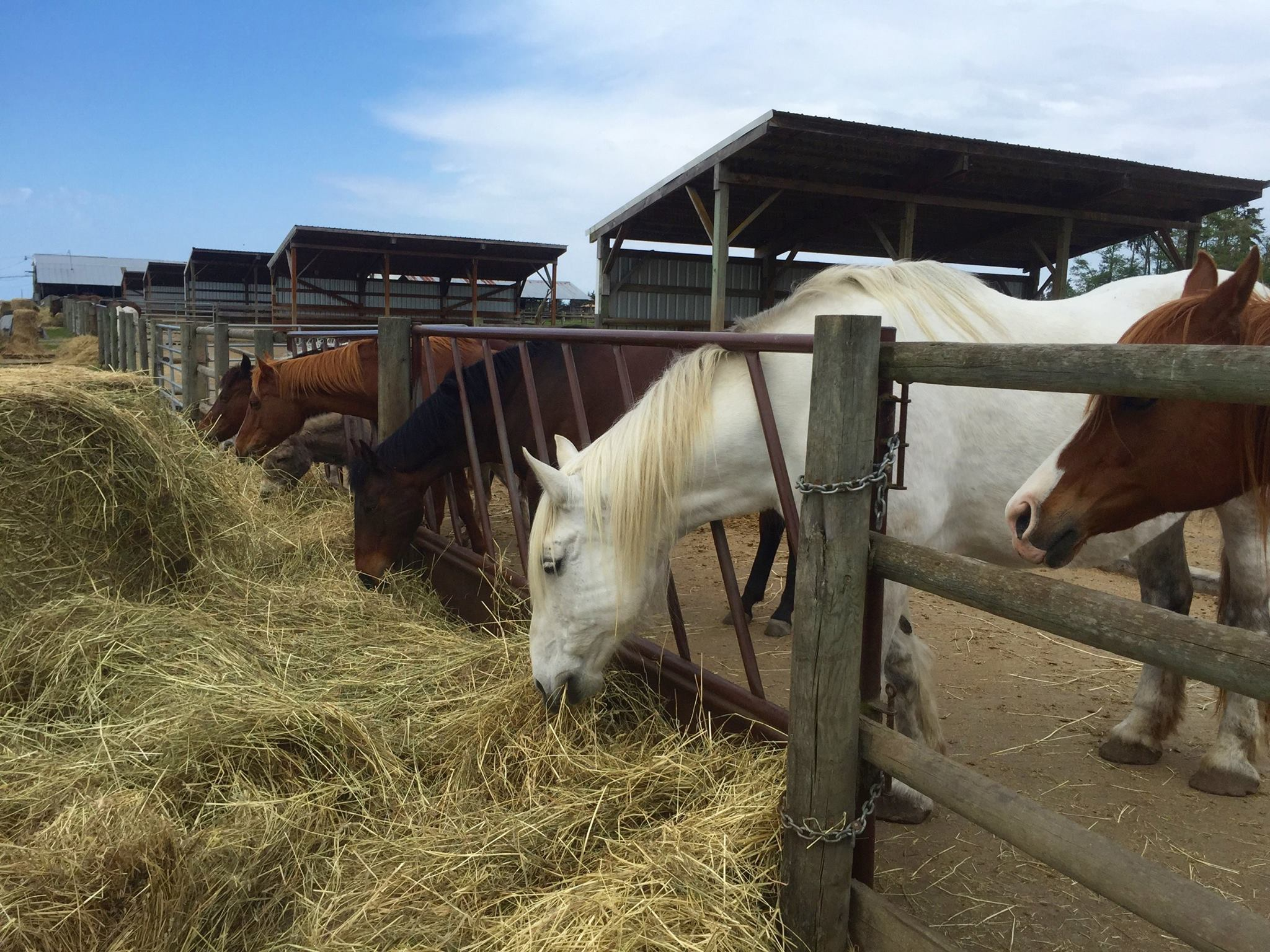Our hay is grown right here on the farm and is analyzed for nutritional content each year.