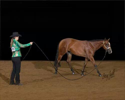Lisa is an accomplished trainer that has worked with a variety of horses and riders. If you feel like this is a program that can help you achieve your goals, contact Lisa!
