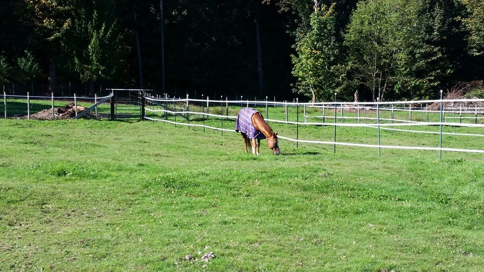 Boarding available for training horses.