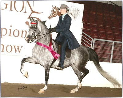 SF Shes All That 1999 Grey Half-Arabian Mare
