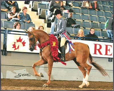 ROL Outer Limits  2001 Chestnut Arabian Stallion
