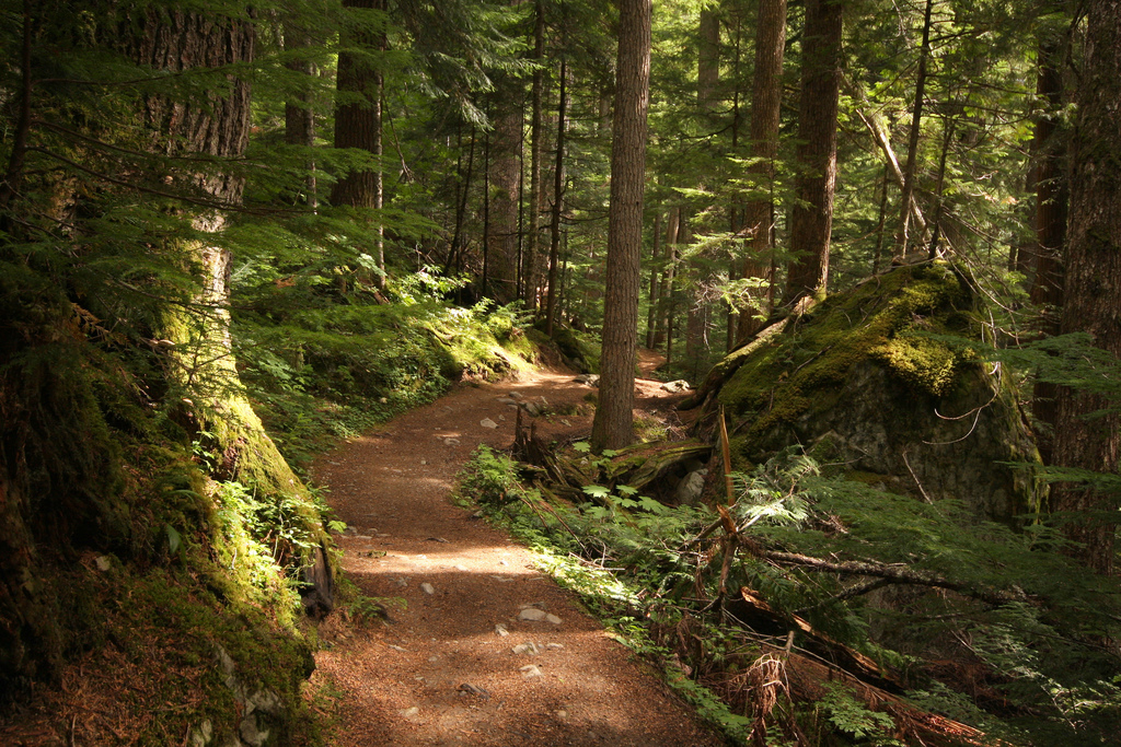 The Lost Lake Loop offers a comfortable trail with a quite breeze through the trees.