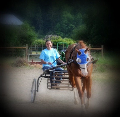 At Willow Brook Farms you can learn basic to advanced horsemanship.