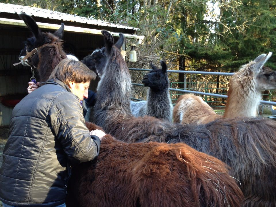 Dr. Colton had the magic touch with Llama and Alpaca.