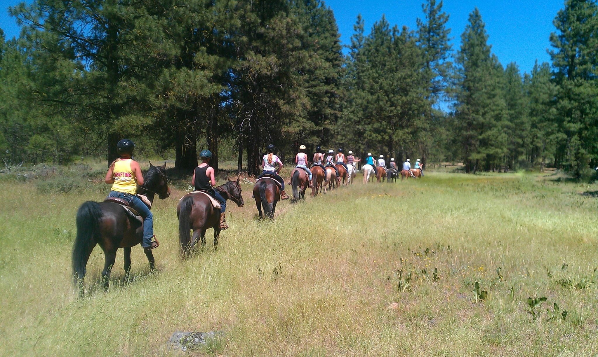 The pine forest and meadows that cover the hill behind the Ranch present a picture-perfect setting for our guided two hour trail rides. Before each ride, our certified wranglers assign the horse best suited to your riding ability.