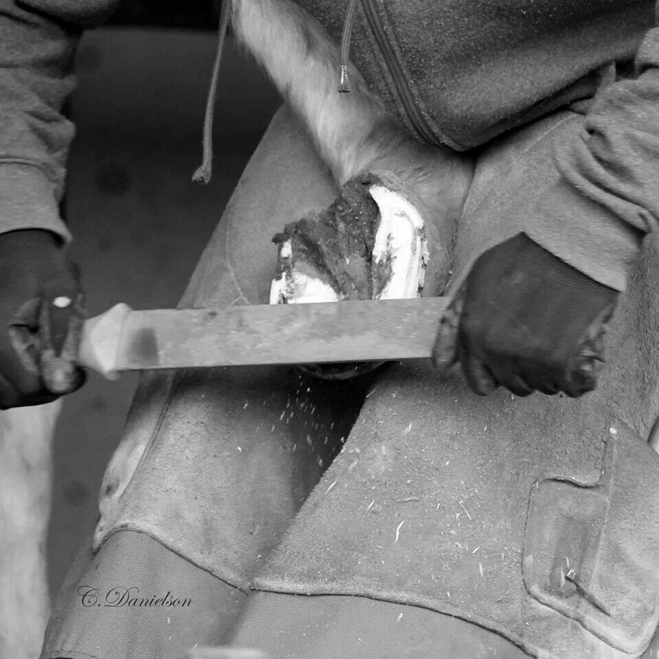 Looking for a reliable and professional farrier.  Contact me and we can discuss your needs.