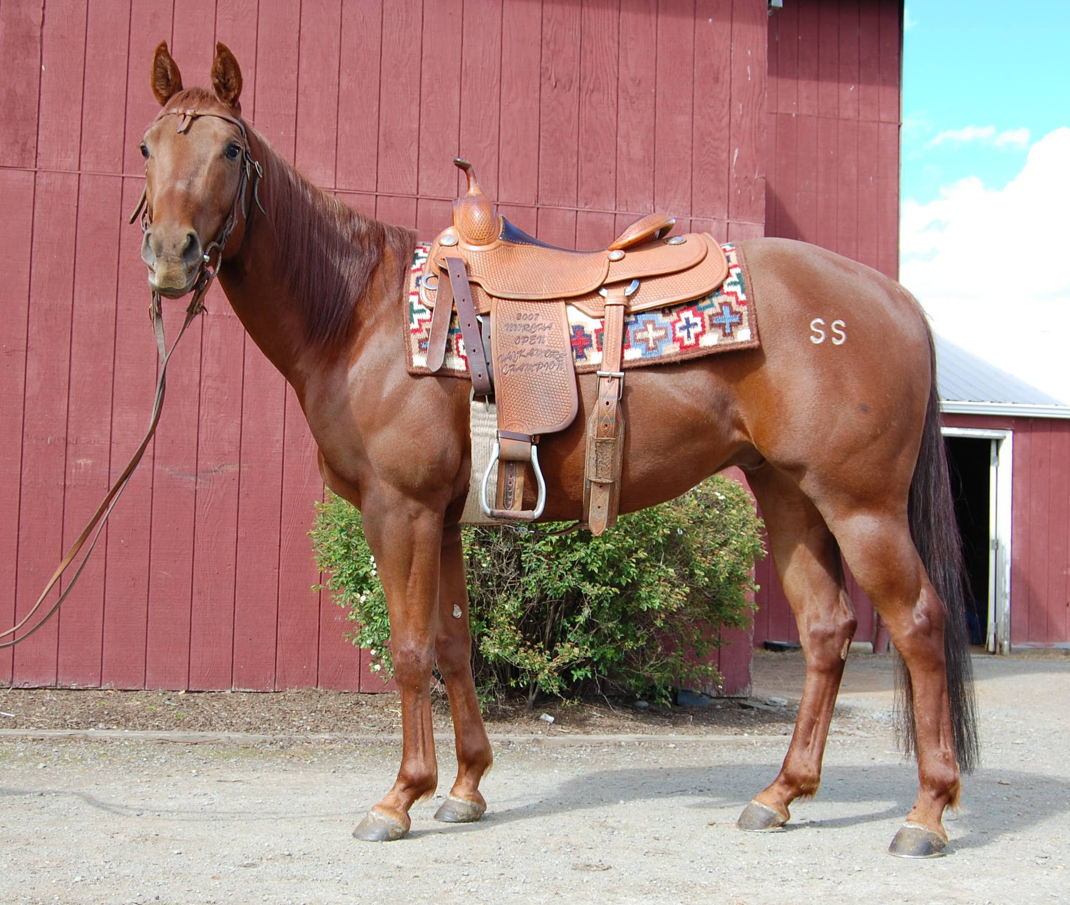 Little Red Cash Box 2011 gelding by Key To My Cash Box out of a Smokum Oak daughter.