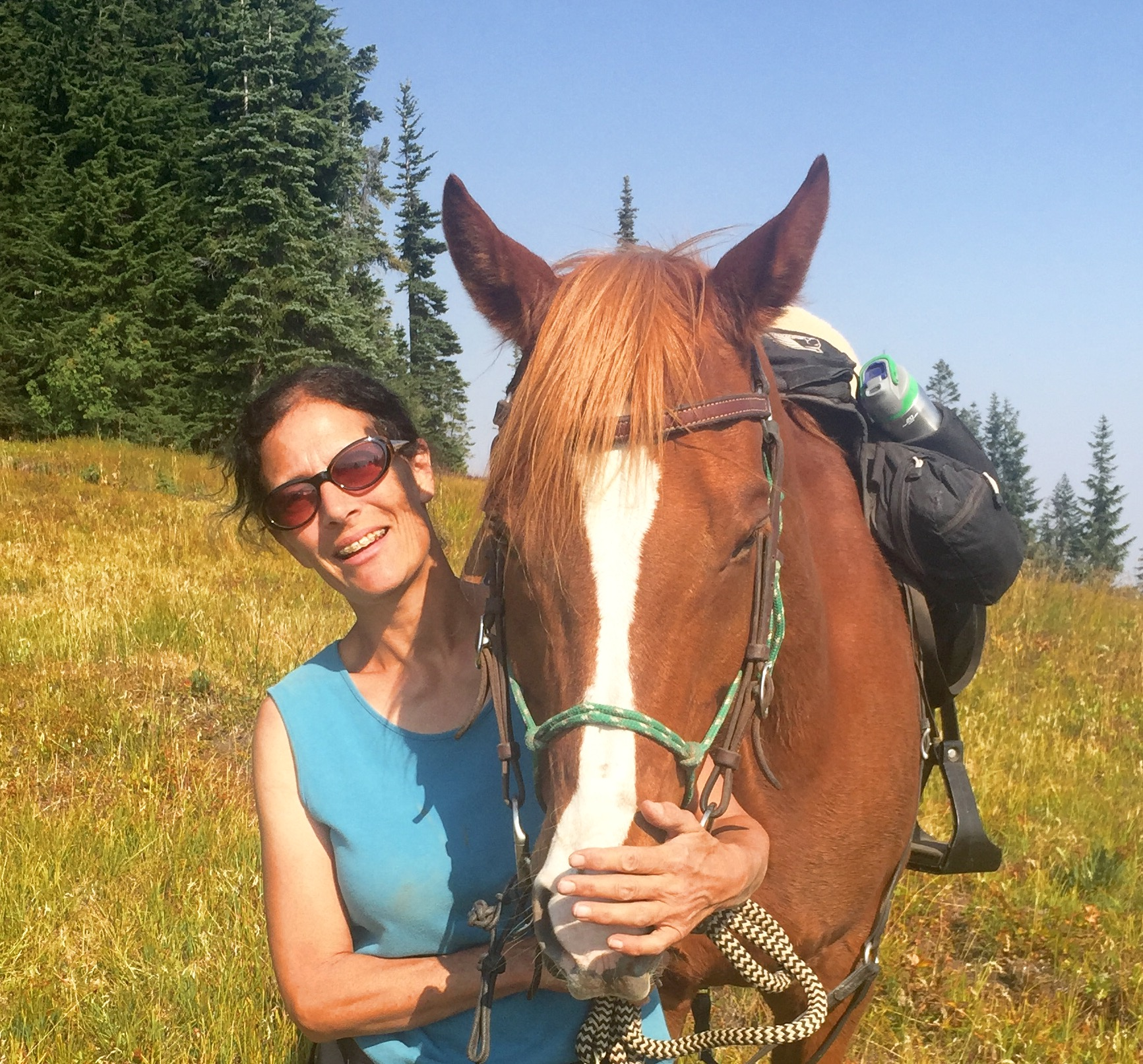 Happy Trails Horse Massage for your equine friend!