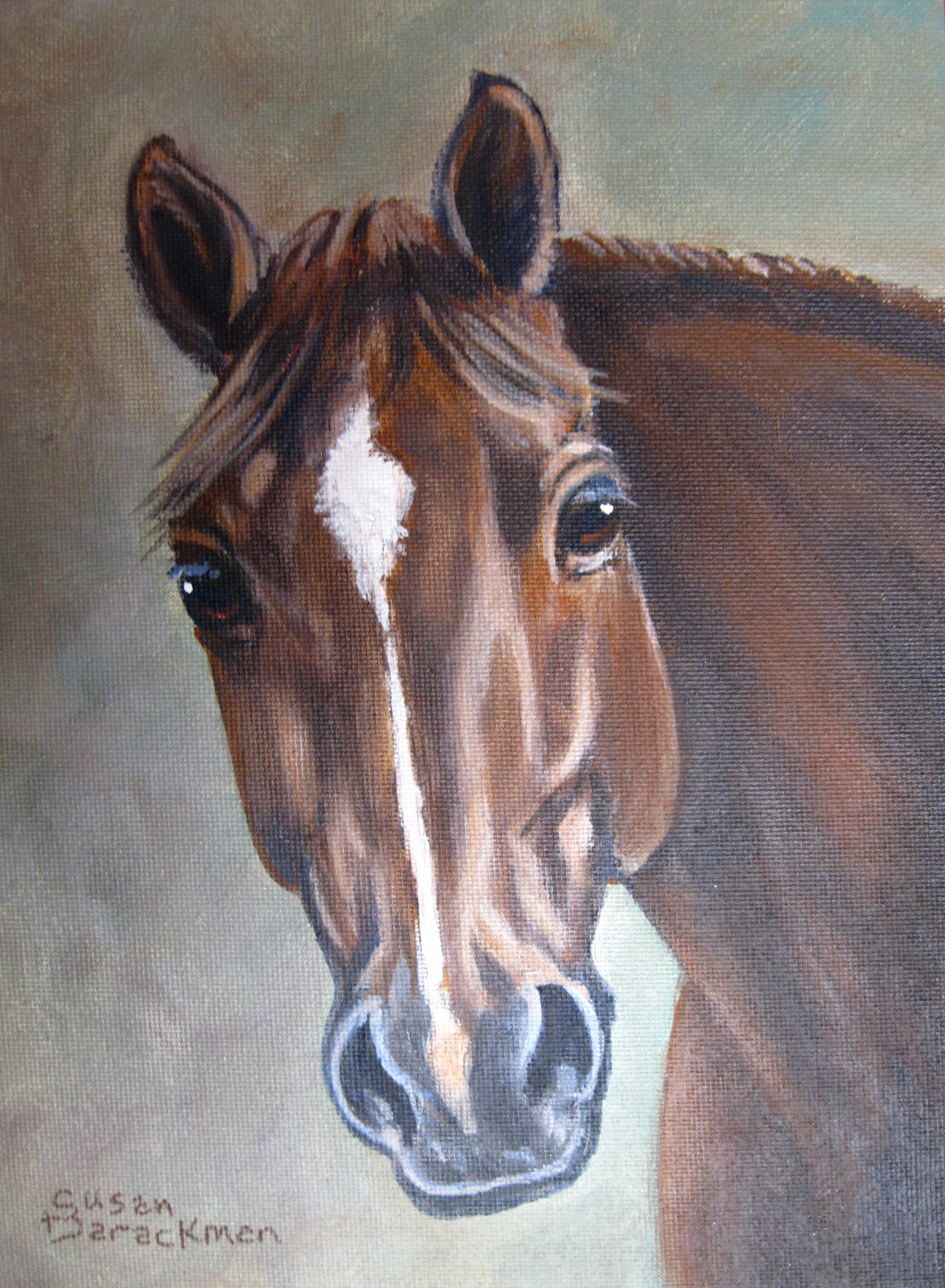 A-horse-portrait-1
