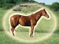 horse-brown-cmyk-auras.jpg