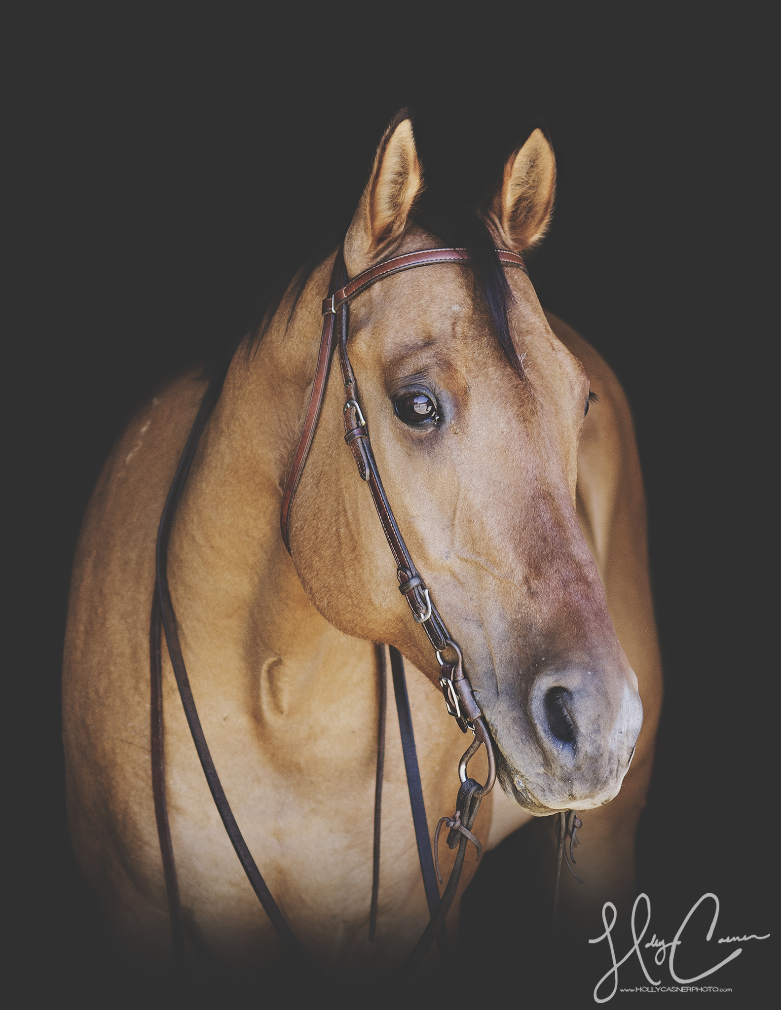 Holly Casner, The Equestrian Photographer – Black Background Portraits